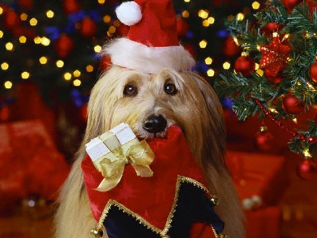 Dicas para que os animais tenham um Feliz Natal e um Próspero Ano Novo